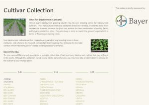 screenshot of the IBA website section dedicated to blackcurrant varieties