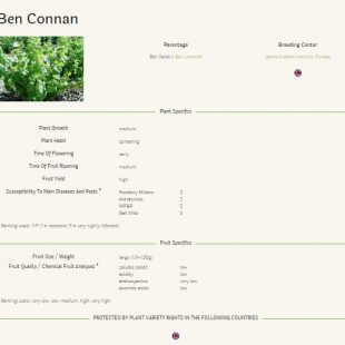 Blackcurrant varieties: detailed descriptions available on the IBA website