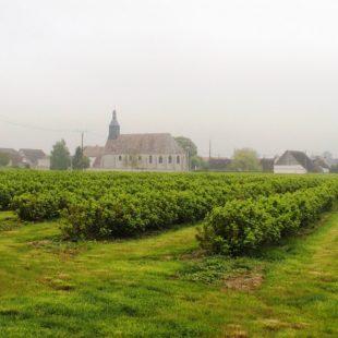Blackcurrants and prestigious names – Les Deux Ormes