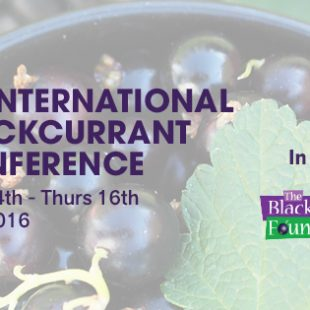 The 5th International Blackcurrant Conference in Ashford, UK: a huge success!