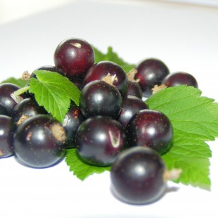 Blackcurrant is now on facebook!