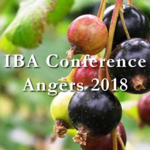 International Blackcurrant Conference 2018: registrations now open