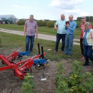 "Open Farm Day at the ""Krogzeme"" organic blackcurrant farm in Latvia"