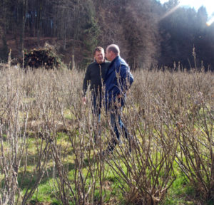IBA president and vice president discussing in a blackcurrant field in Austria